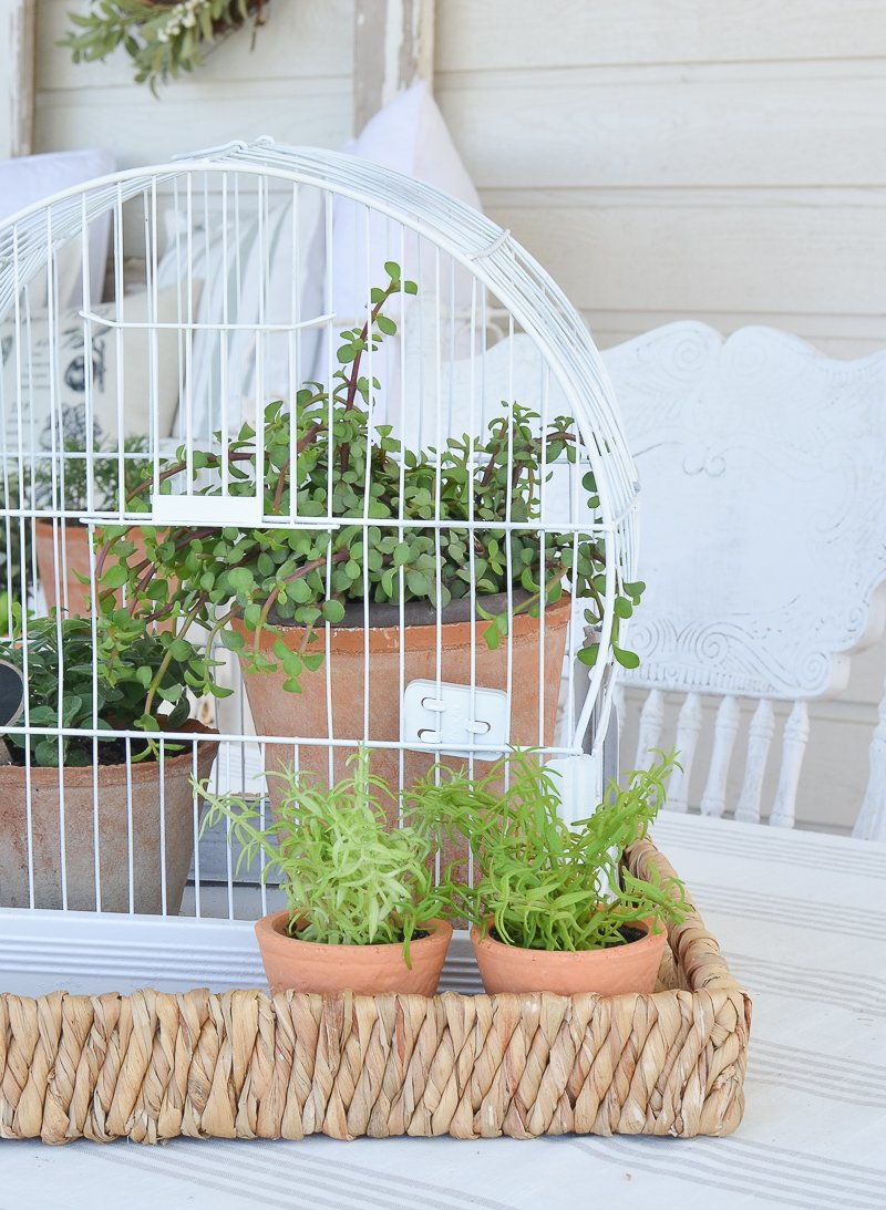 DIY Vintage Bird Cage Planter. Great idea for easy summer garden decor!