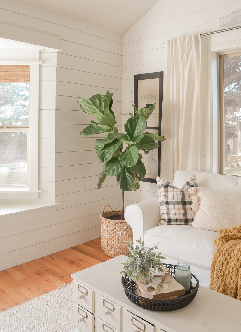 How To Take Care of a Fiddle Leaf Tree. Easy tips for taking care of a fiddle leaf tree.